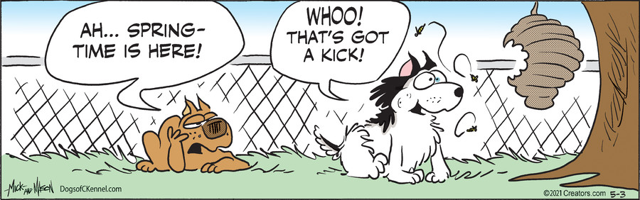 Dogs of C-Kennel for May 03, 2021