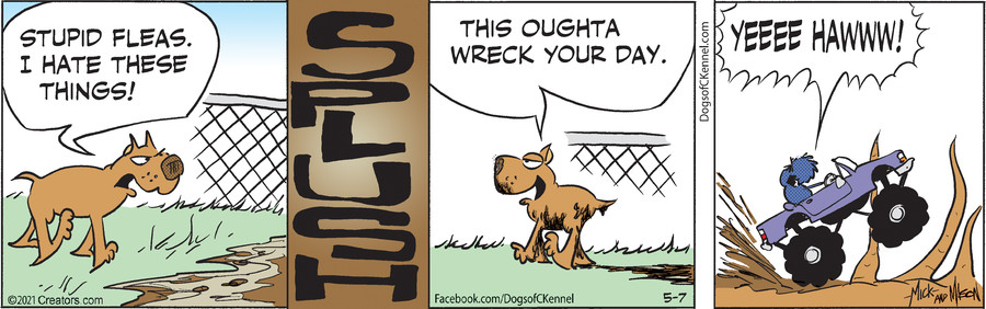 Dogs of C-Kennel for May 07, 2021